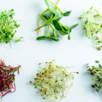 Health Benefits of Microgreens