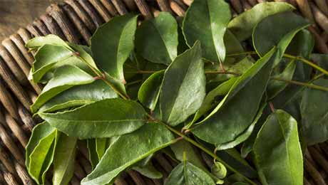 Can Curry Leaves Help Bring Blood Sugar Levels Down? Let's Find Out