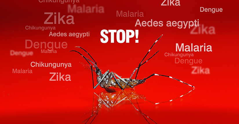 Stay Away from Mosquito Driven Diseases This Monsoon