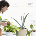 Your Guide to Indoor Plants that Can Purify Air Naturally