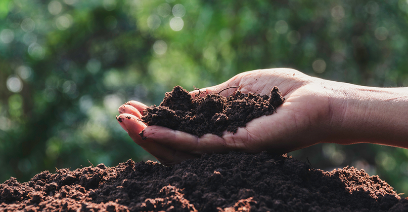 World Soil Day 2020 -Keep Soil Alive, Protect Soil Biodiversity