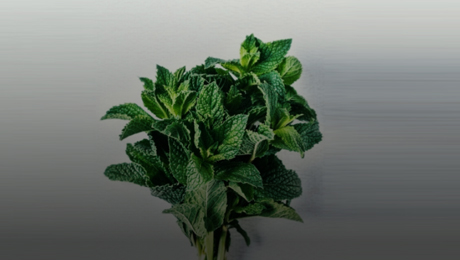 Health benefits of Mint leaves in Diet