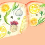 Understanding the Role of Diet in Liver Health