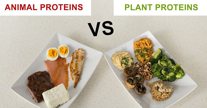 5 Benefits of Plant Protein vs Animal Protein